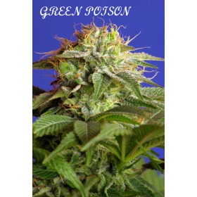 Green Poison 70% indica, 25...