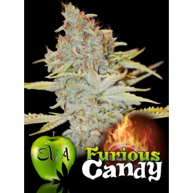 Furious Candy 70% indica, 9...