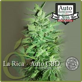 LA RICA CBD 3 SEMILLAS...