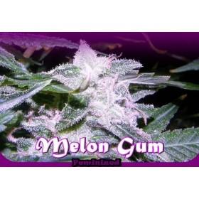 Melon Gum 85% indica, 2...
