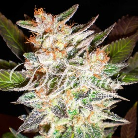 Delicious Candy 75% indica,...