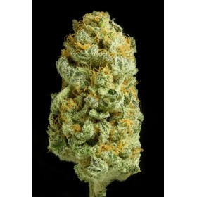 Critical Cheese 90% indica,...