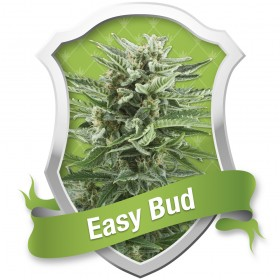 EASY BUD AUTOFLORECIENTE...