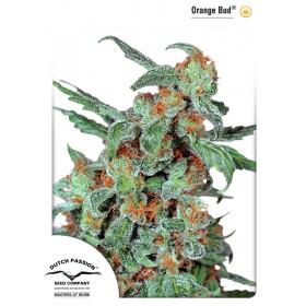Orange Bud 75% sativa 3...