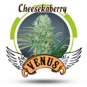 Cheeskaberry 75% indica, 1...