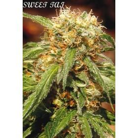 Sweet Tai 70% sativa, 3...