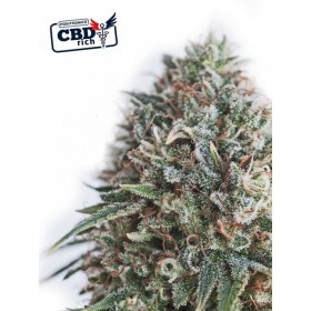 Critical #47 CBD 50% 1...